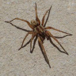 Уничтожение пауков в Миассе